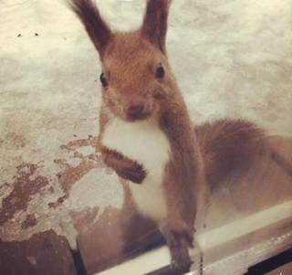 萌得心都化了:每天来敲窗要饼干的小松鼠